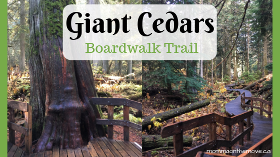 giant cedars boardwalk